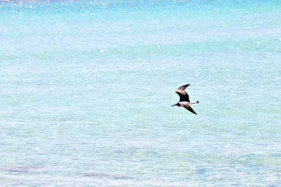 Beautiful Beaches in Panama City Beach Florida