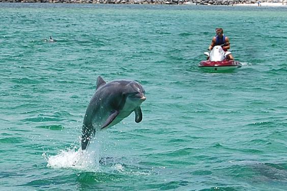Jet Ski Dolphin Tour!