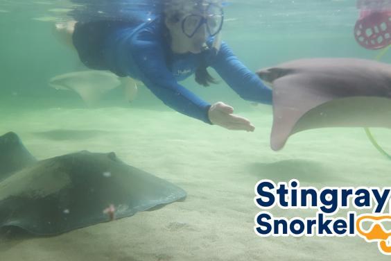 Stingray Snorkel