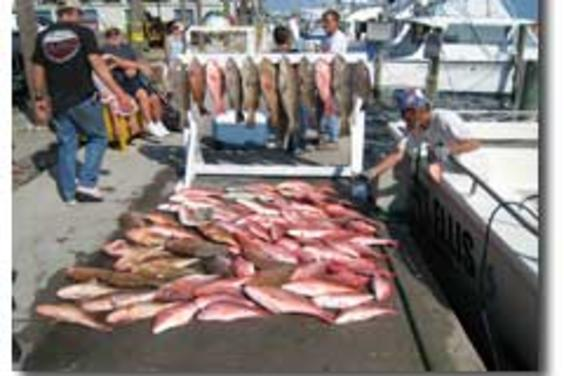 What a MESS~! Red Snappers & Groupers