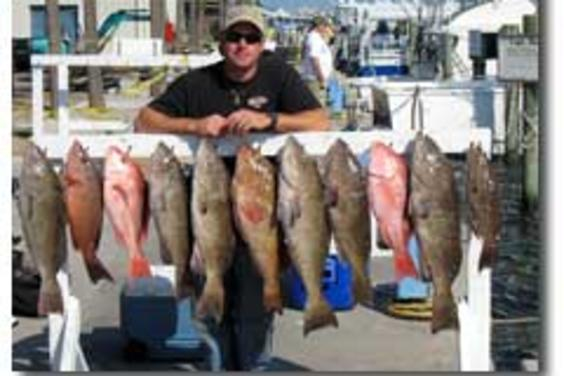 Scamp, Red Snapper, Black & Red Grouper~!