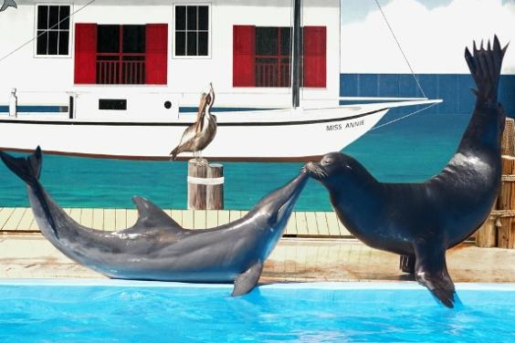 Sea Lion & Rough-toothed Dolphin Show