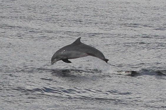 Capt. Anderson III - Shell Island & Dolphin Encounter