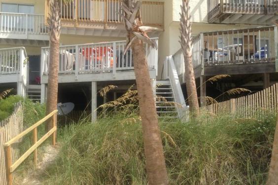 palm tree back yard