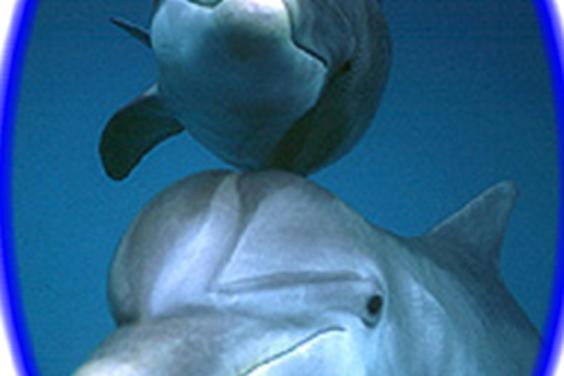 Hello Mother and Baby Dolphin