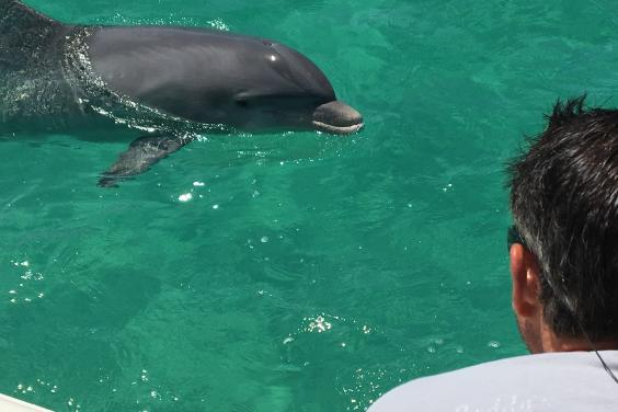 up close and personal with the dolphins