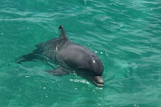 Family Dolphin Tours