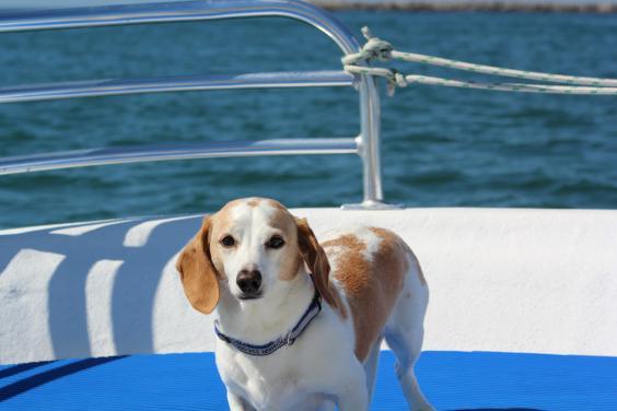 Ole Sea Dog