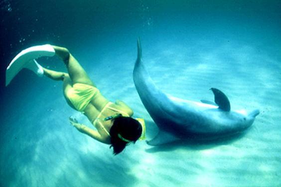 Mina and the Dolphin