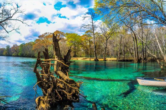 Cypress Springs
