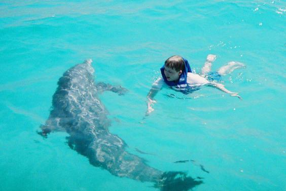 Dolphin Tours & More Cody & Dolphin