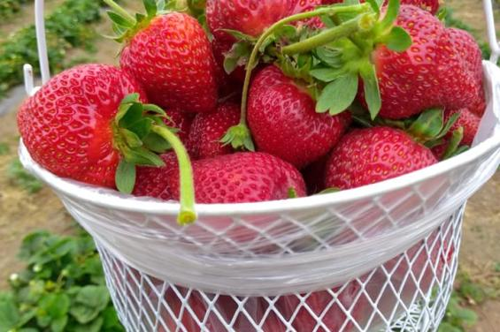 R&r Berries