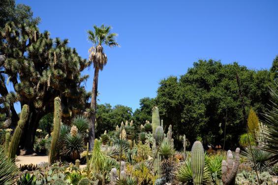 Arizona Cactus Garden 2