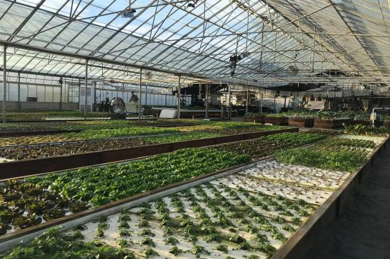 Aquaponics_Farms_HalfMoonBay 2