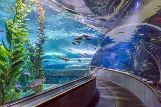 Aquarium of the Bay 1
