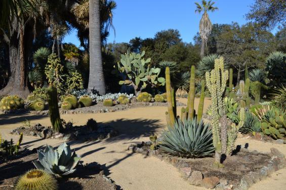 Arizona Cactus Garden 1