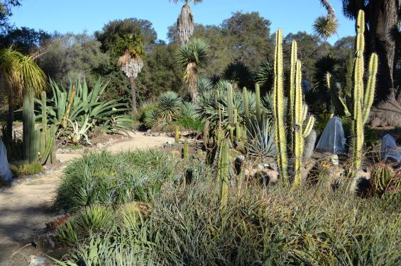 Arizona Cactus Garden 4