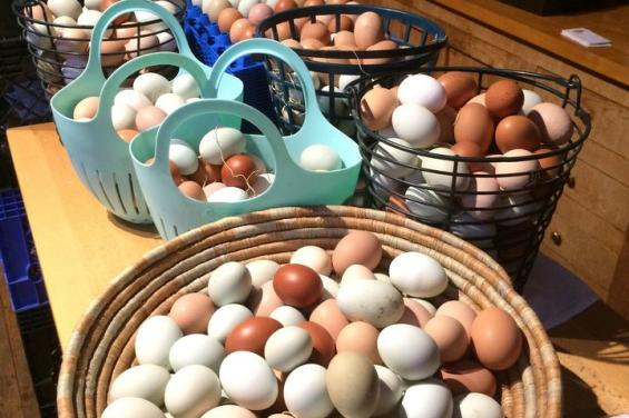 Basket-of-eggs-from-farm-fatales