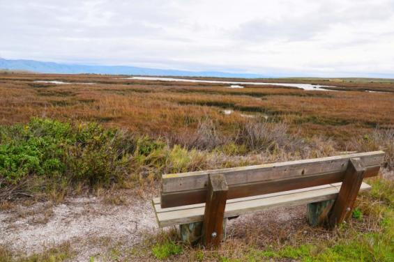 Baylands_Nature_Preserve_by_Edna_Takeda_Geller_(18).jpg