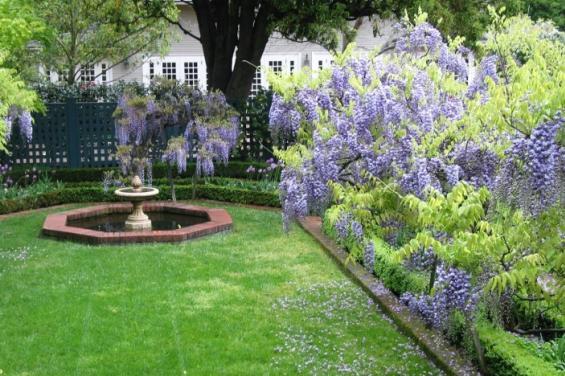 Gamble_Gardens_Wisteria_Garden_(Copy).JPG