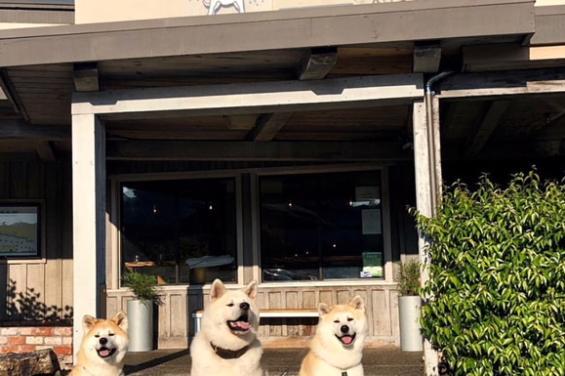 Waterdog Tavern 1