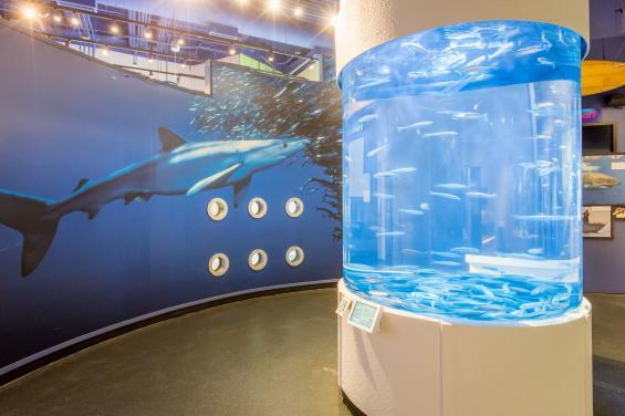 Aquarium of the Bay 3