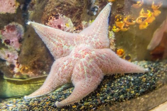 Aquarium of the Bay 4
