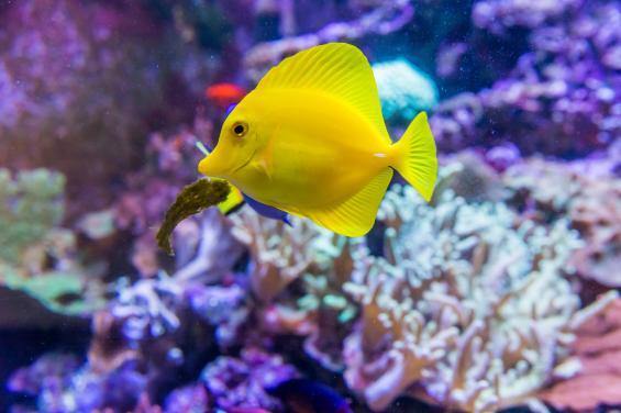 Aquarium of the Bay 5