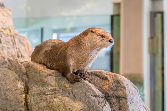 Aquarium of the Bay 7