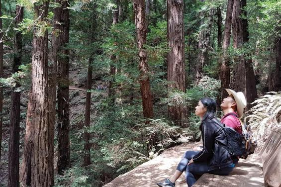 Surround yourself with California's redwoods