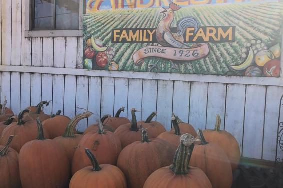 Pumpkins-in-front-of-Andreotti-Sign-at-Andreotti-Family-Farms-in-Half-Moon-Bay