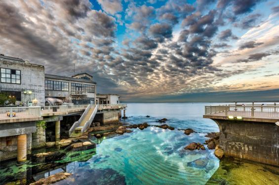 Monterey Bay Aquarium 4