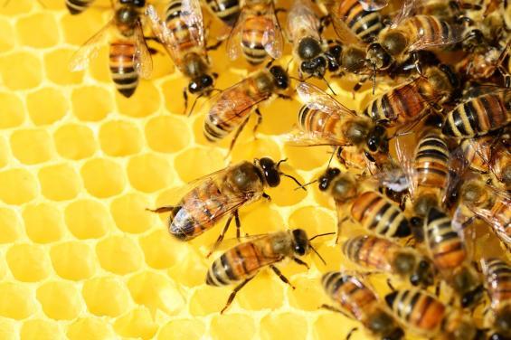 State Street Honey
