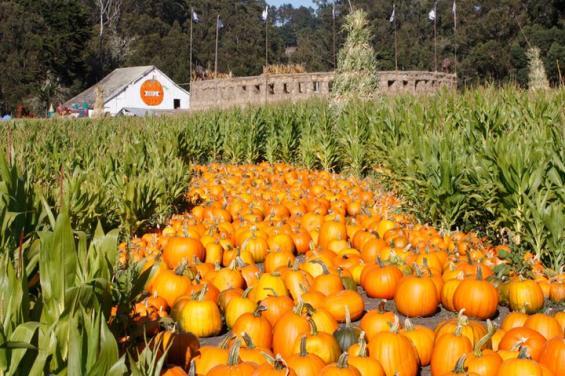 Aratas Pumpkin Farm