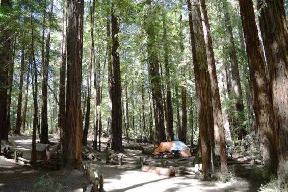 Butano_State_Park_2.jpg