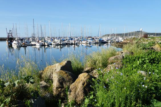 Pillar Point Harbor 3