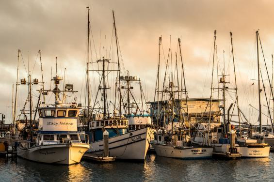 Pillar Point Harbor by Bradley Wittke
