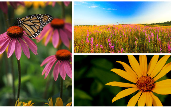 Native Plants 101: Creating and Promoting Native Ecosystems at Home