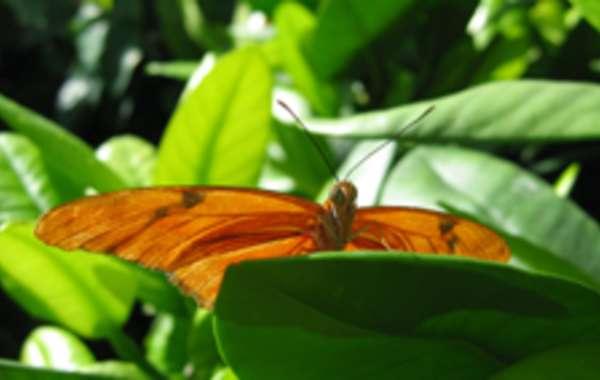 Olbrich's Blooming Butterflies