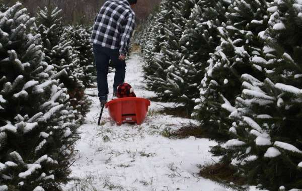Pick The Perfect Christmas Tree