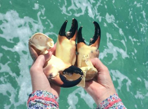 Stone crab claws in Palm Coast and the Flagler Beaches