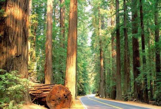 Three Day Redwoods & Brews Itinerary