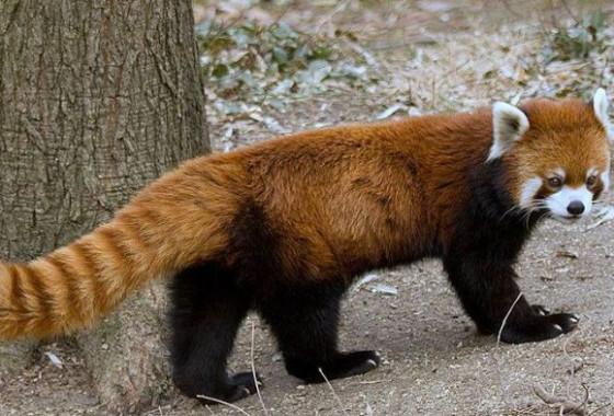 Sequoia Park & Zoo