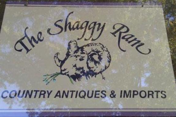12543_6255_shaggy ram.jpg