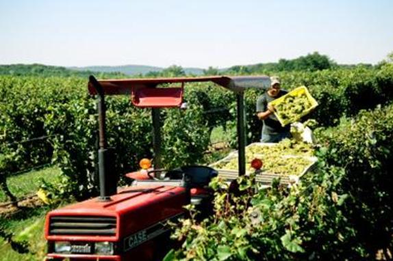 13_5056_Tarara Winery 2.jpg