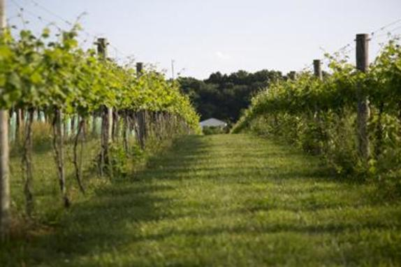146043_5044_North Gate Vineyard 3.jpg