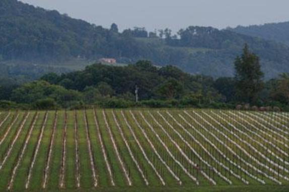 148505_4950_868 main vineyard at 868-1253.jpg