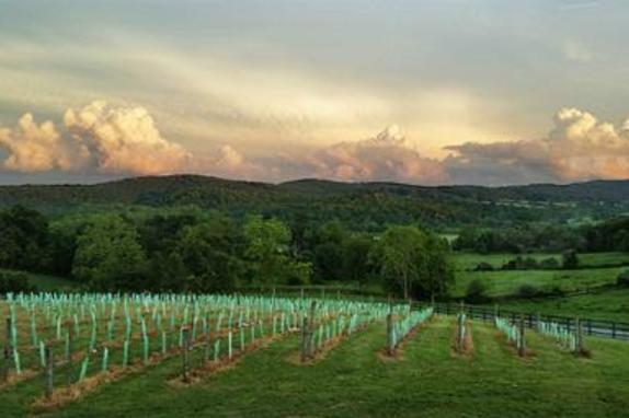 149600_6704_50 west vineyards.jpg