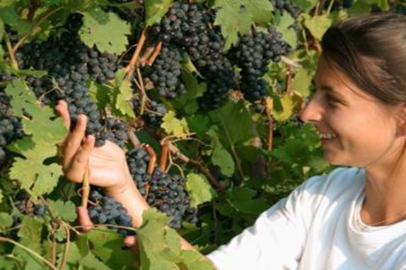 1536_5008_Doukenie Winery 4.jpg