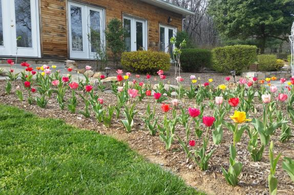 Springtime Tulips at Stone Manor's Solarium Reception Hall